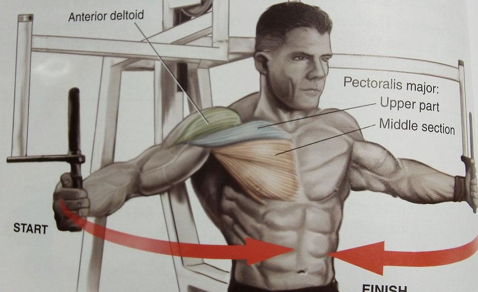 exercises man chest boob