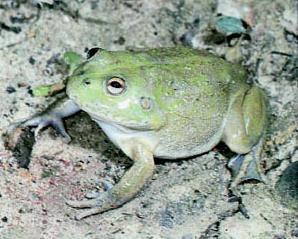 toys sex desert frog xxx