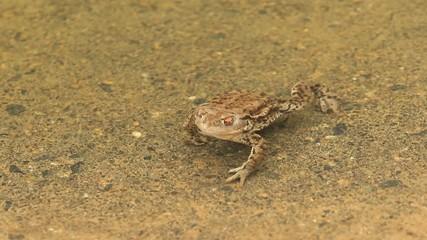 frog sex desert xxx toys